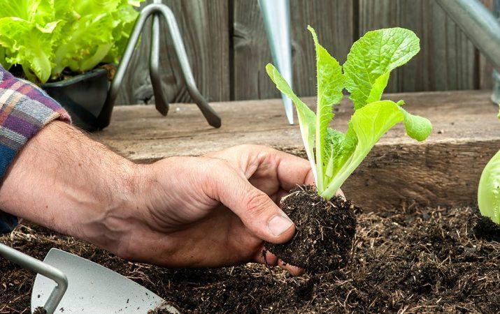 Gartensortiment im Baumarkt