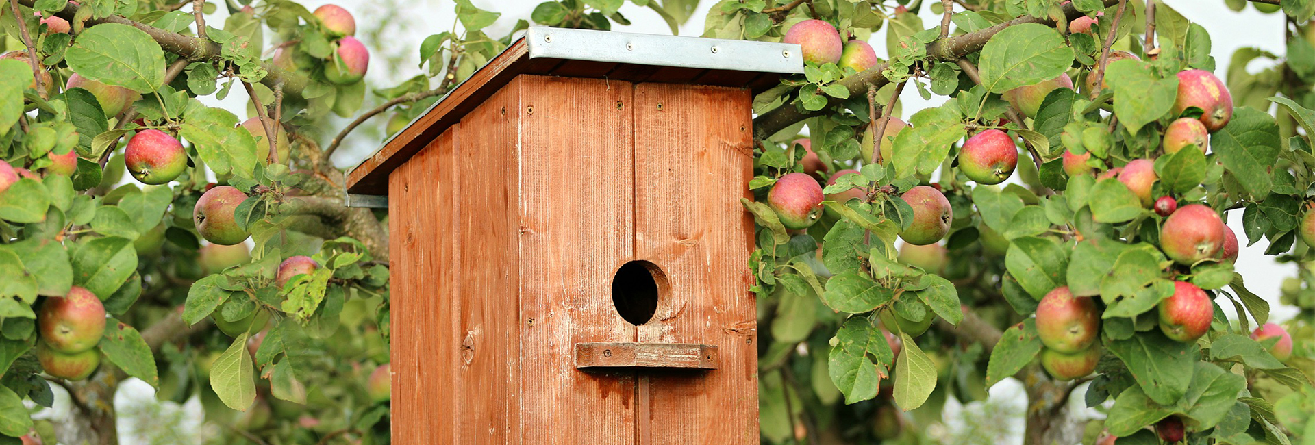 Anleitung Vogelhaus selber bauen